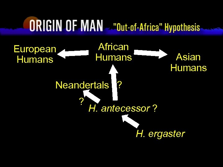 """Origin of Man """"Out-of-Africa"""" Hypothesis African Humans European Humans Asian Humans Neandertals ? ?"""