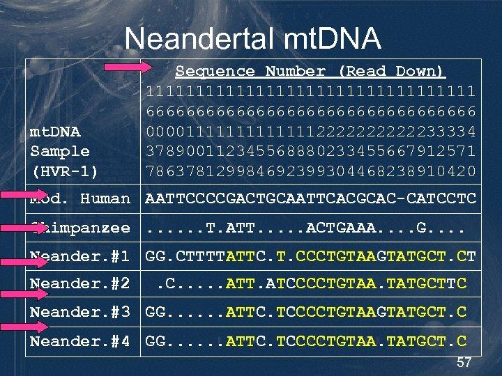 Neandertal mt. DNA Sample (HVR-1) Sequence Number (Read Down) 11111111111111111 66666666666666666 0000111111122222233334 378900112345568880233455667912571 786378129984692399304468238910420