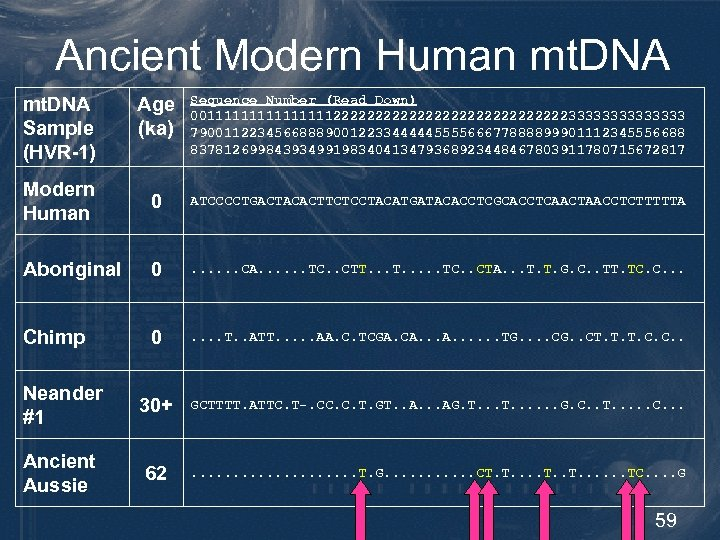 Ancient Modern Human mt. DNA Age (ka) Sequence Number (Read Down) 0011111111222222222222223333333 79001122345668889001223344444555566677888899901112345556688 83781269984393499198340413479368923448467803911780715672817