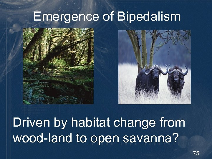 Emergence of Bipedalism Driven by habitat change from wood-land to open savanna? 75