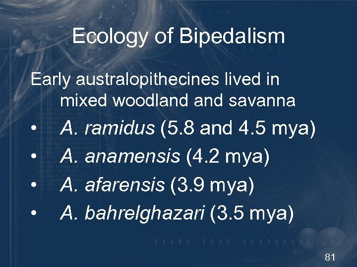 Ecology of Bipedalism Early australopithecines lived in mixed woodland savanna • • A. ramidus