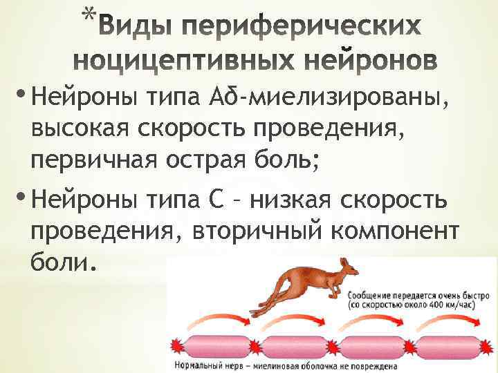 * • Нейроны типа Аδ-миелизированы, высокая скорость проведения, первичная острая боль; • Нейроны типа