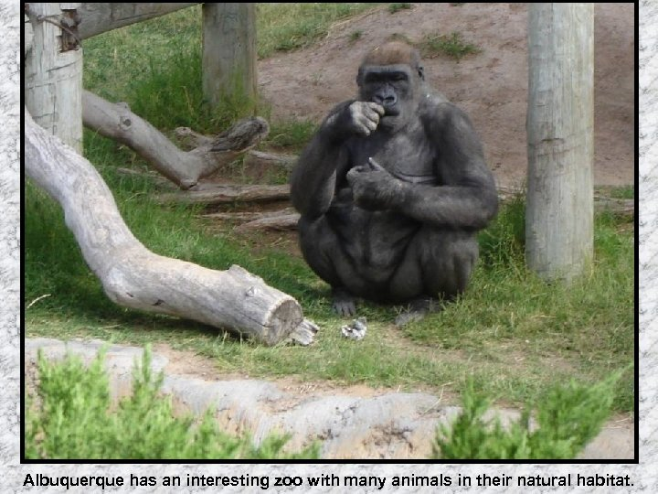 Albuquerque has an interesting zoo with many animals in their natural habitat.
