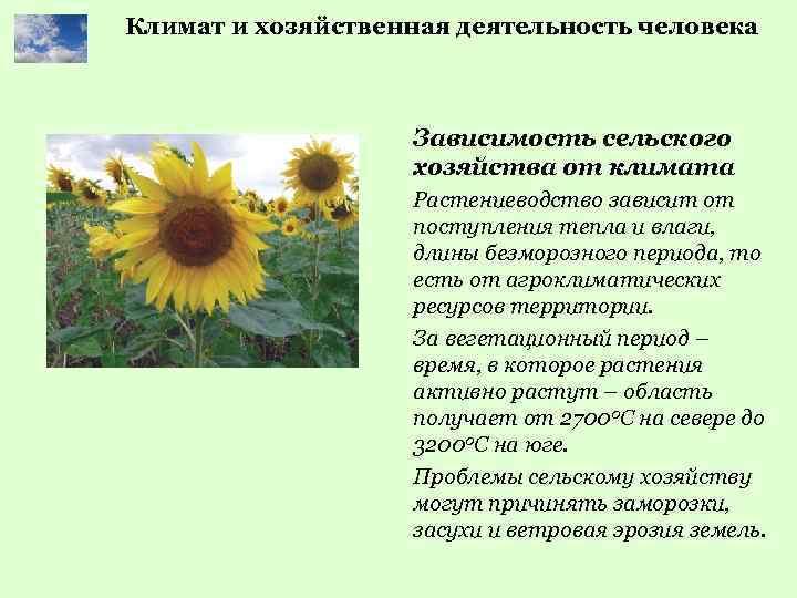 Климат и хозяйственная деятельность человека Зависимость сельского хозяйства от климата Растениеводство зависит от поступления