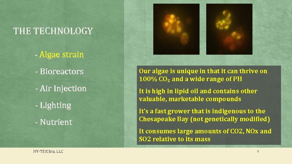 THE TECHNOLOGY - Algae strain - Bioreactors - Air Injection - Lighting - Nutrient