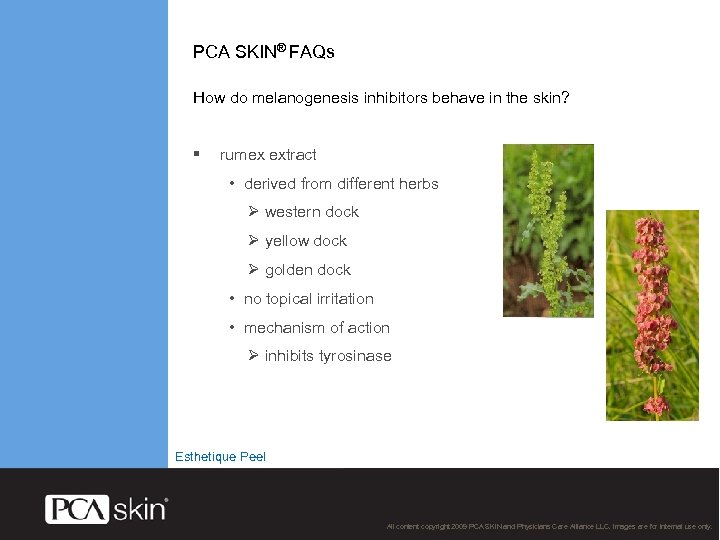 PCA SKIN® FAQs How do melanogenesis inhibitors behave in the skin? § rumex extract