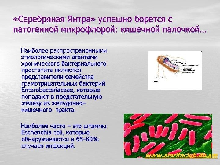 Escherichia coli простатит простатит и слабая эрекция