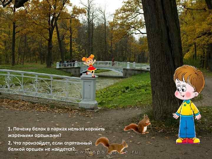 1. Почему белок в парках нельзя кормить жареными орешками? 2. Что произойдет, если спрятанный