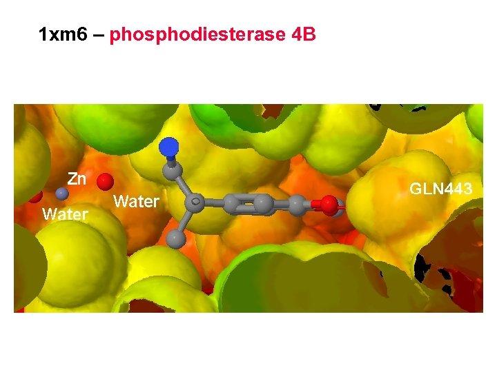 1 xm 6 – phosphodiesterase 4 B