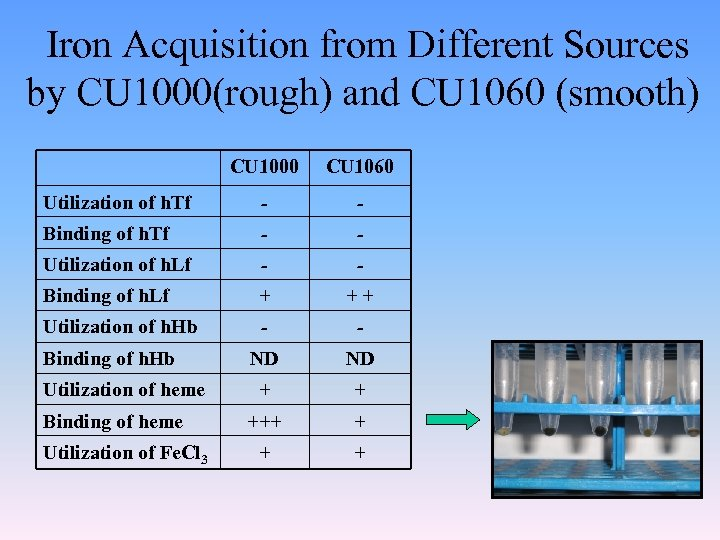 Iron Acquisition from Different Sources by CU 1000(rough) and CU 1060 (smooth) CU 1000