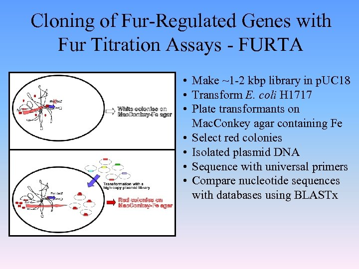 Cloning of Fur-Regulated Genes with Fur Titration Assays - FURTA • Make ~1 -2
