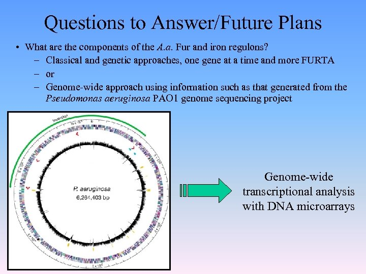 Questions to Answer/Future Plans • What are the components of the A. a. Fur
