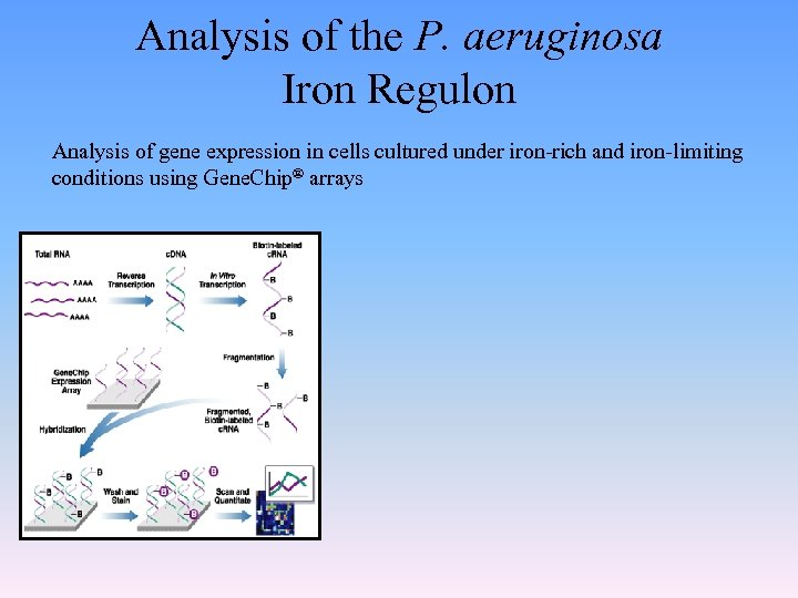 Analysis of the P. aeruginosa Iron Regulon Analysis of gene expression in cells cultured