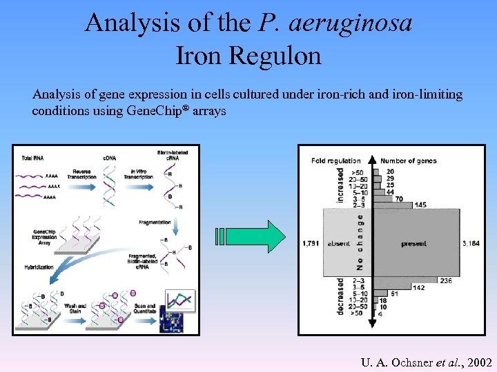 Analysis of the P. aeruginosa Iron Regulon Analysis of gene expression in cells cultured