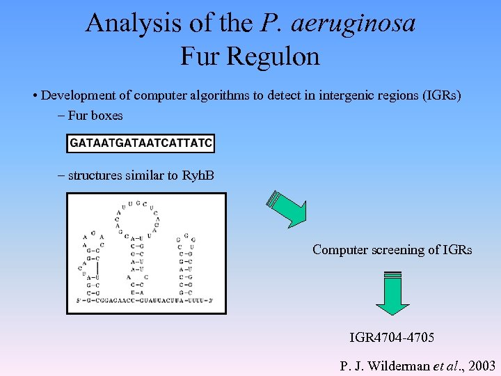 Analysis of the P. aeruginosa Fur Regulon • Development of computer algorithms to detect