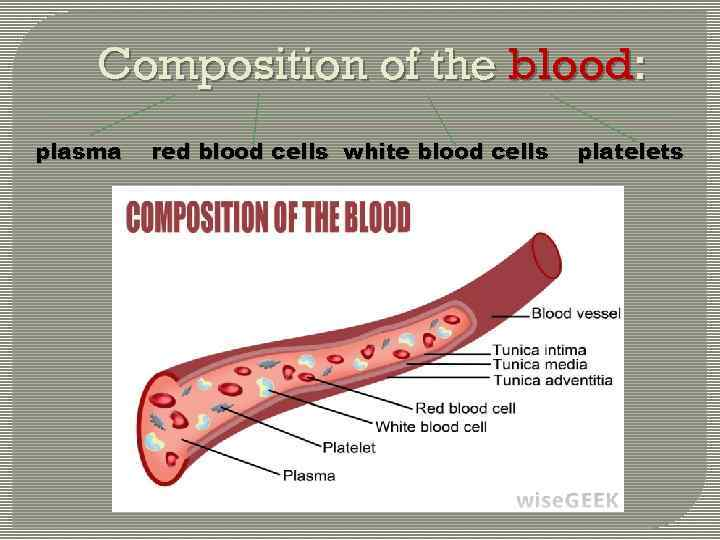 Composition of the blood: plasma red blood cells white blood cells platelets