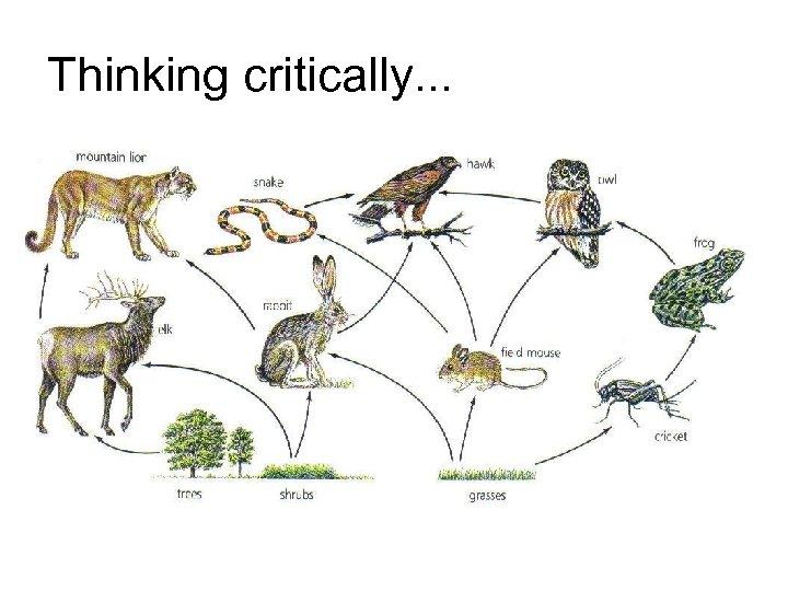 Thinking critically. . .