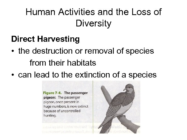 Human Activities and the Loss of Diversity Direct Harvesting • the destruction or removal