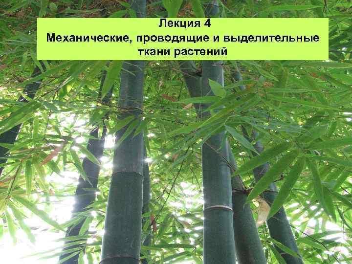 Лекция 4 Механические, проводящие и выделительные ткани растений