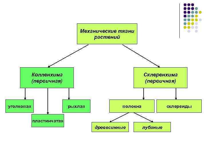 Механические ткани растений Колленхима (первичная) уголковая Склеренхима (первичная) рыхлая волокна склереиды пластинчатая древесинные лубяные
