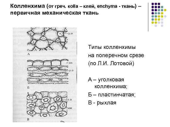 Колленхима (от греч. кolla – клей, enchyma - ткань) – первичная механическая ткань Типы