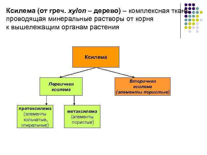 Ксилема (от греч. хylon – дерево) – комплексная ткань, проводящая минеральные растворы от корня