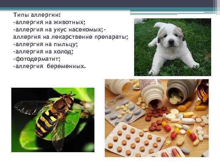 Типы аллергии: -аллергия на животных; -аллергия на укус насекомых; аллергия на лекарственне препараты; -аллергия