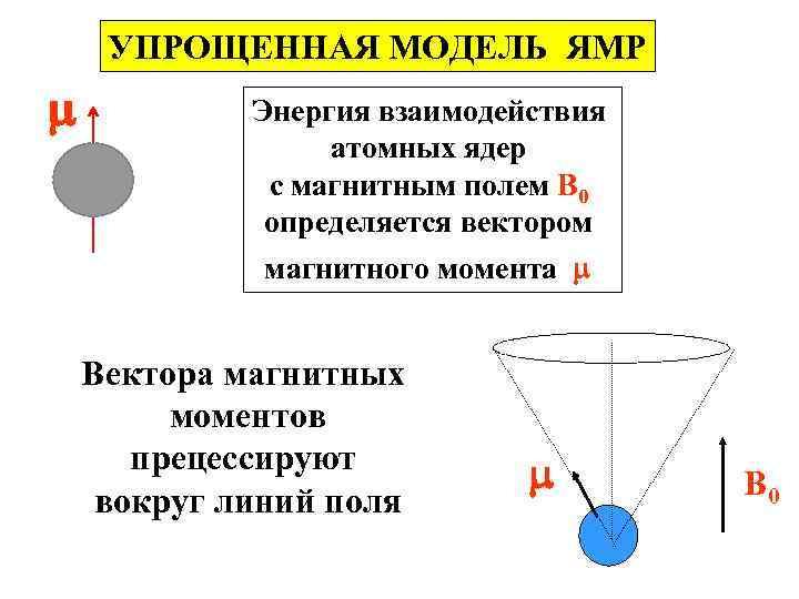 УПРОЩЕННАЯ МОДЕЛЬ ЯМР Энергия взаимодействия атомных ядер с магнитным полем B 0 определяется вектором