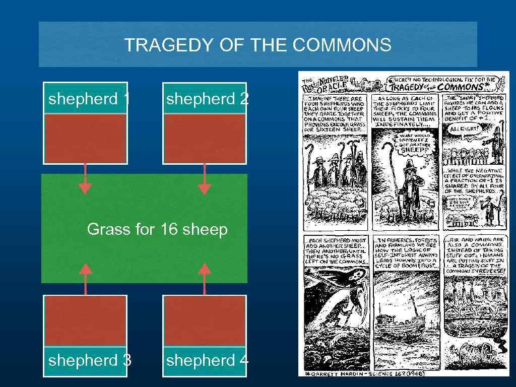 TRAGEDY OF THE COMMONS shepherd 1 shepherd 2 Grass for 16 sheep shepherd 3