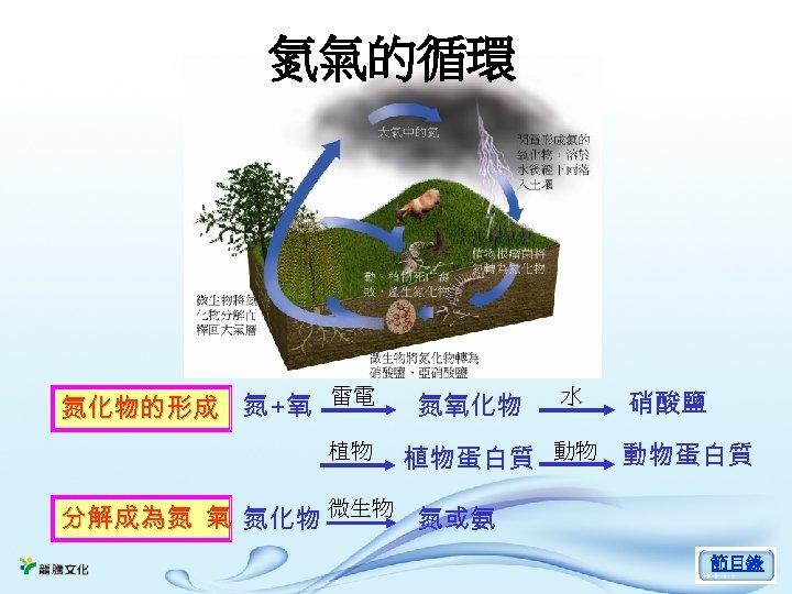 氮氣的循環 雷電 氮化物的形成 氮 +氧 植物 氮氧化物 水 硝酸鹽 植物蛋白質 動物 動物蛋白質 分解成為氮 氣