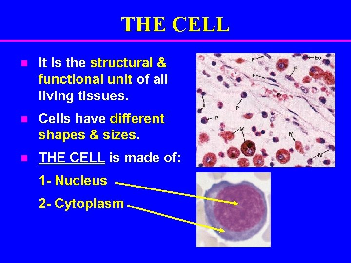 THE CELL n It Is the structural & functional unit of all living tissues.