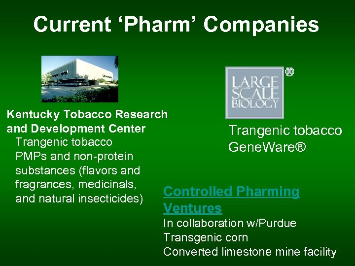 Current 'Pharm' Companies Kentucky Tobacco Research and Development Center Trangenic tobacco Gene. Ware® PMPs