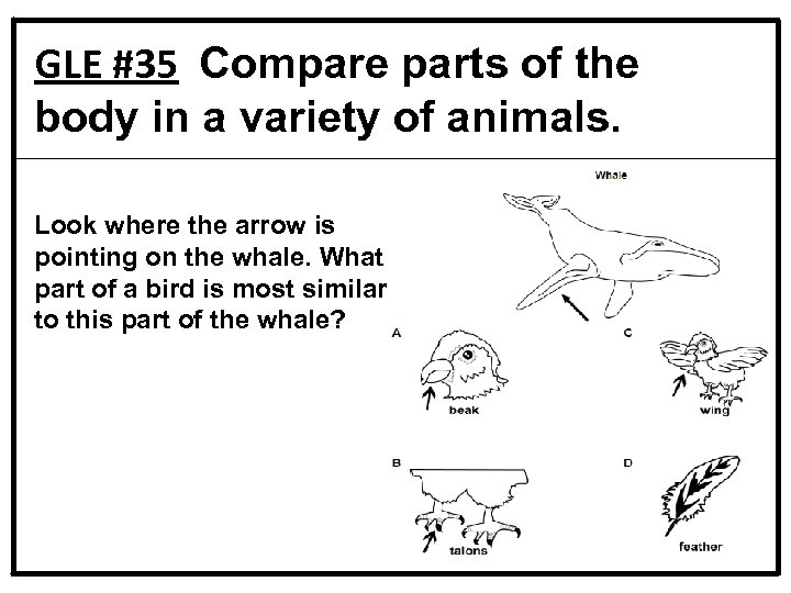 GLE #35 Compare parts of the body in a variety of animals. Look where