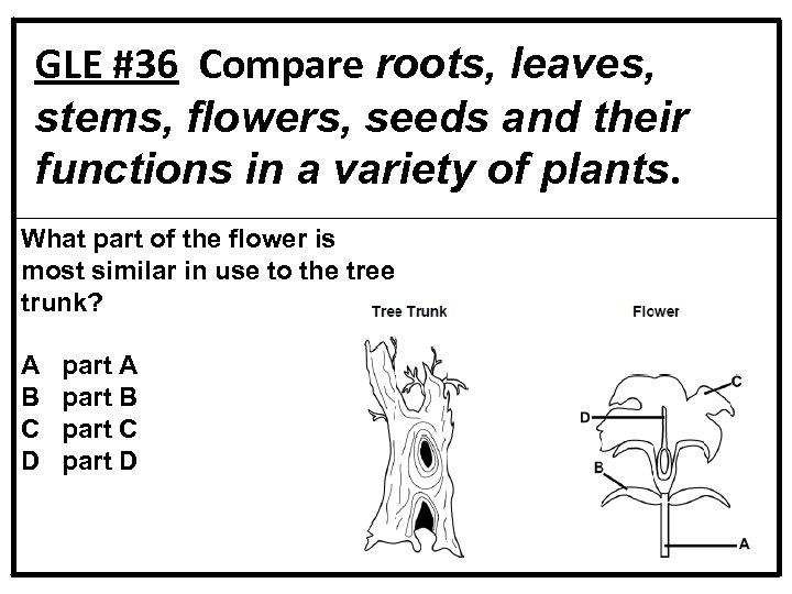 GLE #36 Compare roots, leaves, stems, flowers, seeds and their functions in a variety