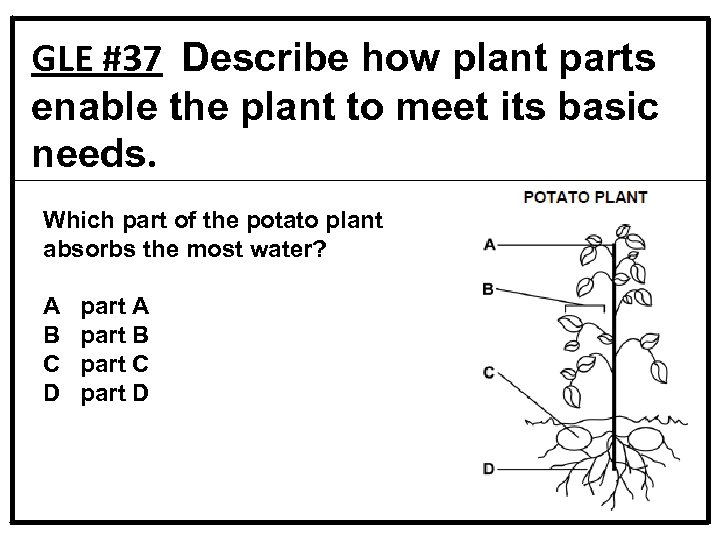 GLE #37 Describe how plant parts enable the plant to meet its basic needs.