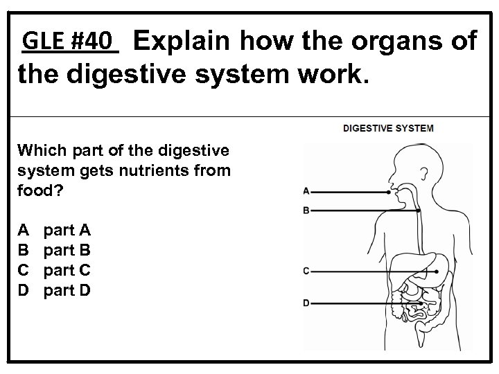 GLE #40 Explain how the organs of the digestive system work. Which part of