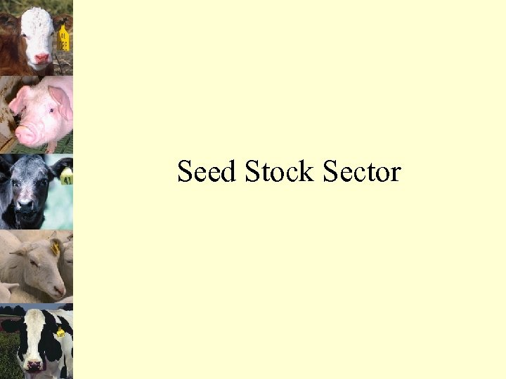 Seed Stock Sector