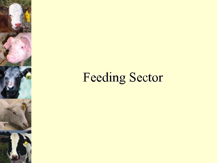Feeding Sector