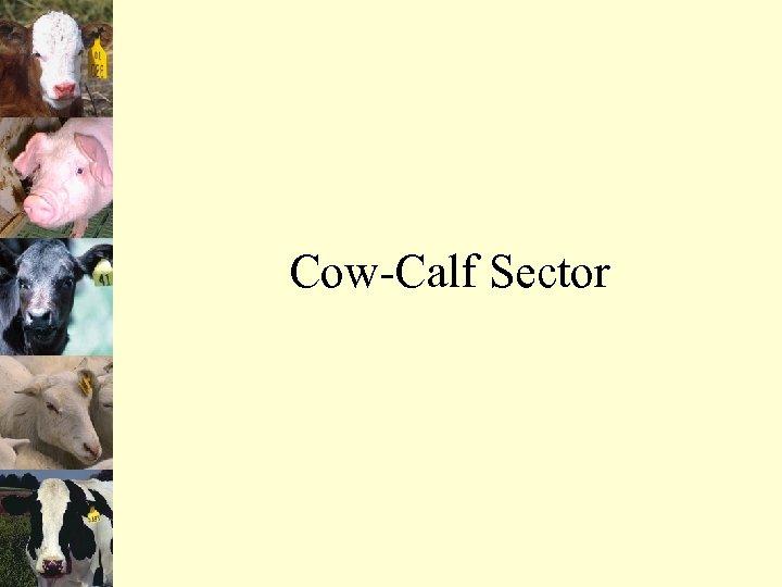 Cow-Calf Sector