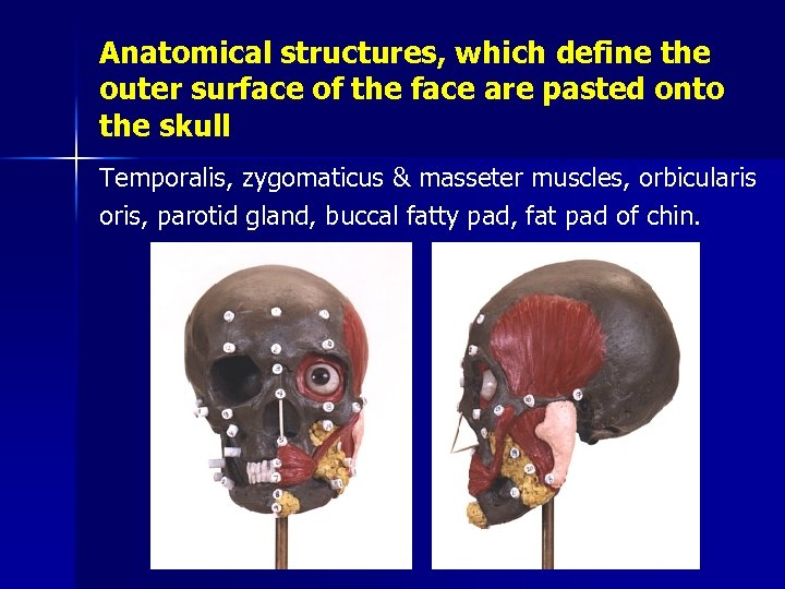 Anatomical structures, which define the outer surface of the face are pasted onto the