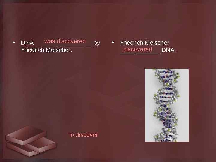 was discovered • DNA _________ by Friedrich Meischer. to discover • Friedrich Meischer discovered