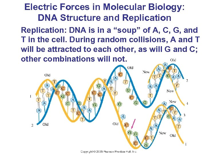 """Electric Forces in Molecular Biology: DNA Structure and Replication: DNA is in a """"soup"""""""