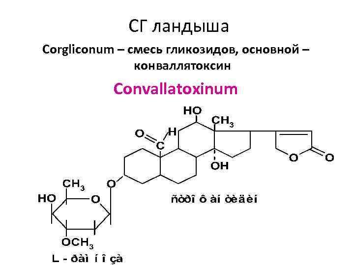 СГ ландыша Corgliconum – смесь гликозидов, основной – конваллятоксин Convallatoxinum