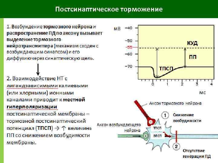 Постсинаптическое торможение