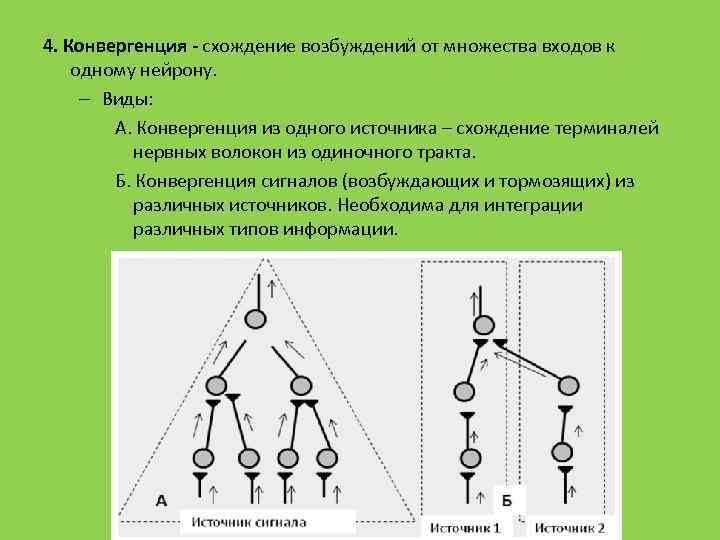 4. Конвергенция - схождение возбуждений от множества входов к одному нейрону. – Виды: А.