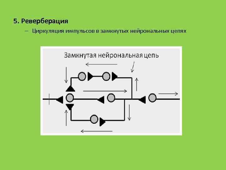 5. Реверберация – Циркуляция импульсов в замкнутых нейрональных цепях