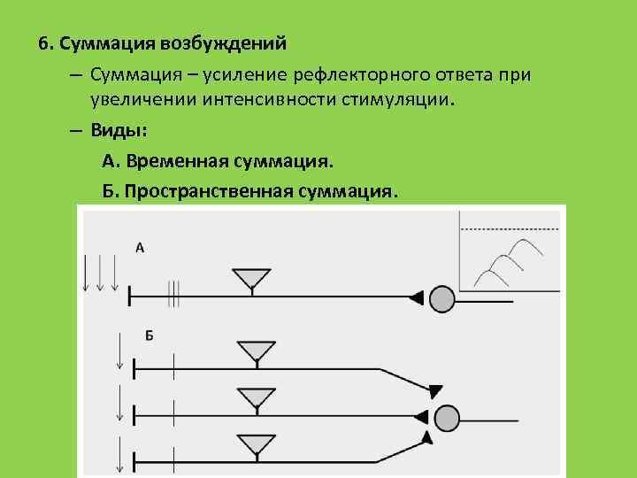 6. Суммация возбуждений – Суммация – усиление рефлекторного ответа при увеличении интенсивности стимуляции. –