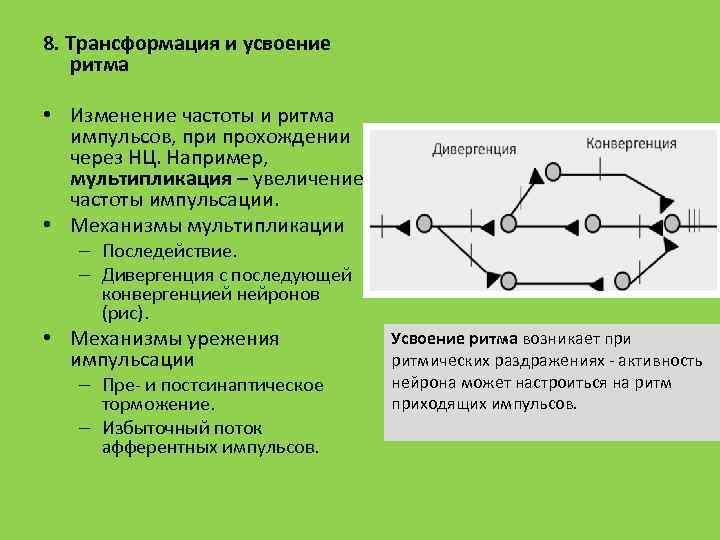 8. Трансформация и усвоение ритма • Изменение частоты и ритма импульсов, при прохождении через