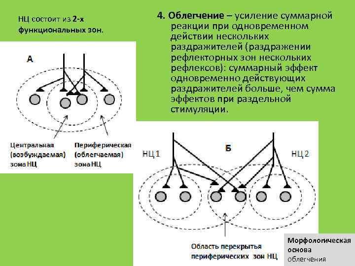 НЦ состоит из 2 -х функциональных зон. 4. Облегчение – усиление суммарной реакции при