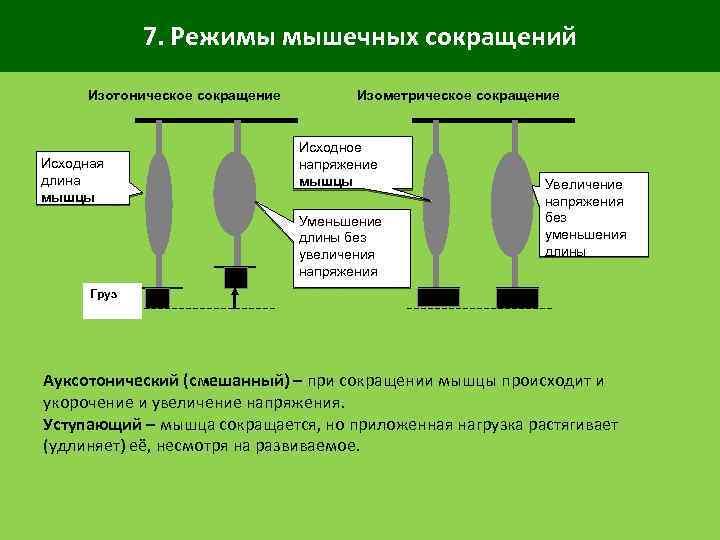 7. Режимы мышечных сокращений Изотоническое сокращение Исходная длина мышцы Изометрическое сокращение Исходное напряжение мышцы